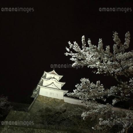 城と夜桜の写真素材 [FYI03392320]