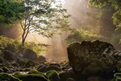 円原川 日本 岐阜県 山県市の写真素材 [FYI03392382]