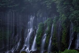 白糸の滝 日本 静岡県 富士宮市の写真素材 [FYI03392386]