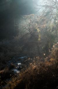 黒田町 日本 愛知県 豊田市の写真素材 [FYI03392401]