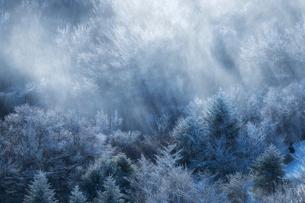冬の茶臼山高原 日本 愛知県 設楽町の写真素材 [FYI03392402]
