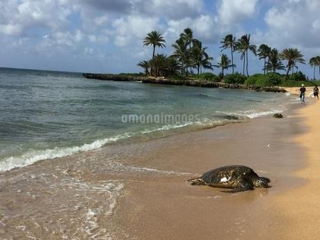 ハワイでの休日の写真素材 [FYI03392487]