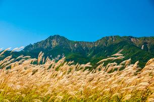 野辺山高原ススキと八ヶ岳の写真素材 [FYI03392521]