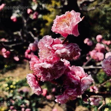 お花の写真素材 [FYI03392530]