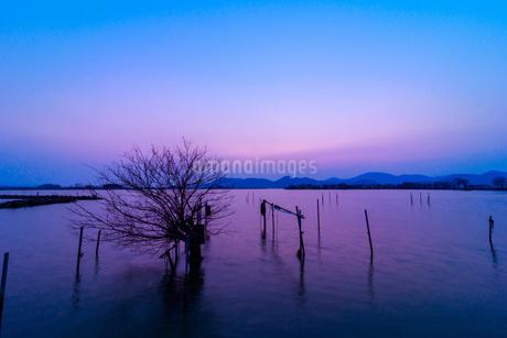 西の湖 日本 滋賀県 近江八幡市の写真素材 [FYI03392827]