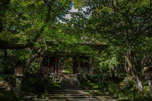 常寂光寺 日本 京都府 京都市の写真素材 [FYI03392841]