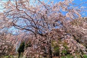 服部緑地 植物園 日本 大阪府 豊中市の写真素材 [FYI03392854]