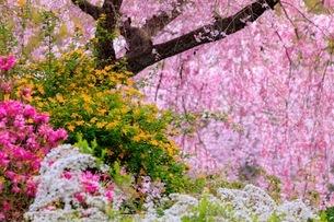 原谷苑 日本 京都府 京都市の写真素材 [FYI03392861]