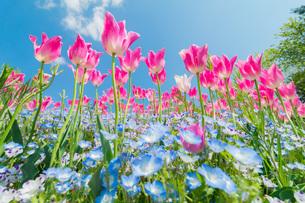淡路島国営明石海峡公園 日本 兵庫県 淡路市の写真素材 [FYI03392866]