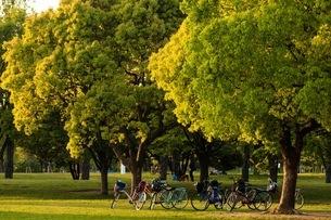 花博記念公園鶴見緑地 日本 大阪府 守口市の写真素材 [FYI03392869]