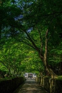 興聖寺 日本 京都府 宇治市の写真素材 [FYI03392876]