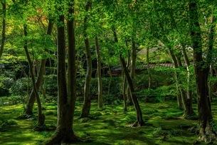 祇王寺 日本 京都府 京都市の写真素材 [FYI03392900]