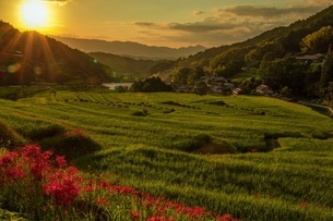 明日香村 日本 奈良県 明日香村の写真素材 [FYI03392902]