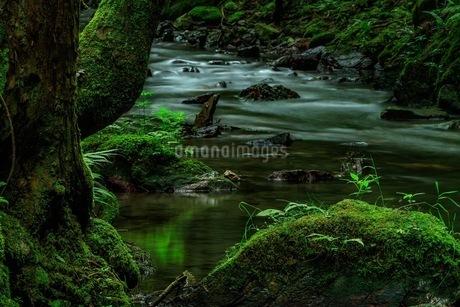 醒井峡谷 日本 滋賀県 米原市の写真素材 [FYI03392903]