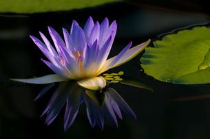 咲くやこの花館 日本 大阪府 大阪市の写真素材 [FYI03392918]