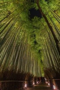 嵐山 竹林 日本 京都府 京都市の写真素材 [FYI03392921]