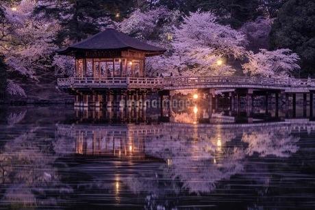 奈良公園 日本 奈良県 奈良市の写真素材 [FYI03392934]