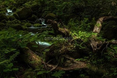 木谷沢渓流 日本 鳥取県 江府町の写真素材 [FYI03392944]