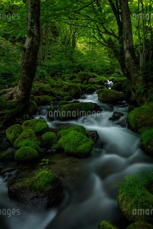 木谷沢渓流 日本 鳥取県 江府町の写真素材 [FYI03392945]