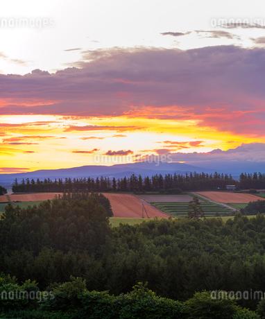 北海道 自然 風景 田園風景と朝焼けの写真素材 [FYI03392985]