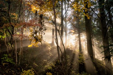 茶臼山高原 日本 愛知県 設楽町の写真素材 [FYI03393060]