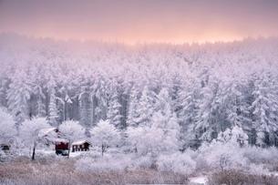 聖高原 日本 長野県 東筑摩郡の写真素材 [FYI03393062]