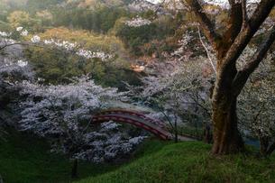桜淵公園 日本 愛知県 新城市の写真素材 [FYI03393071]