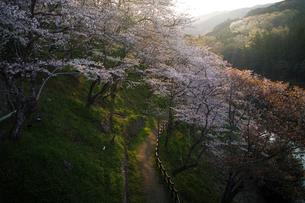 桜淵公園 日本 愛知県 新城市の写真素材 [FYI03393072]