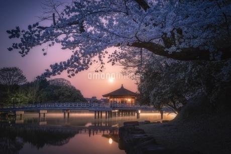 奈良公園 浮見堂と満開の桜 日本 奈良県 奈良市の写真素材 [FYI03393079]