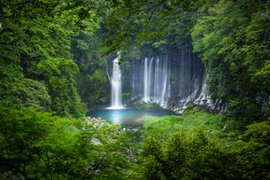 白糸の滝 日本 静岡県 富士宮市の写真素材 [FYI03393082]