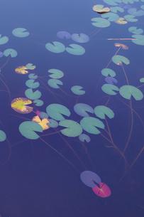 志賀高原 一沼 日本 長野県 山ノ内町の写真素材 [FYI03393092]