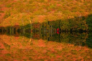 蔦沼(つたぬま) 日本 青森県 十和田市の写真素材 [FYI03393097]