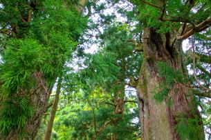 熊野古道の写真素材 [FYI03393139]