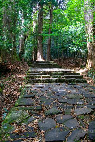 熊野古道の写真素材 [FYI03393141]