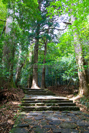 熊野古道の写真素材 [FYI03393142]
