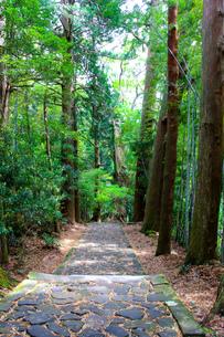 熊野古道の写真素材 [FYI03393144]