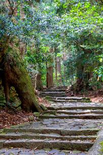 熊野古道の写真素材 [FYI03393146]
