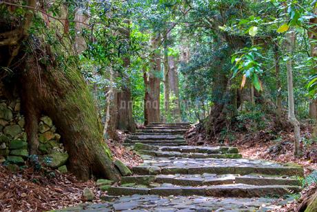 熊野古道の写真素材 [FYI03393147]