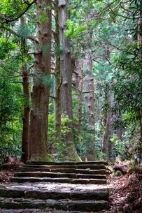 熊野古道の写真素材 [FYI03393148]