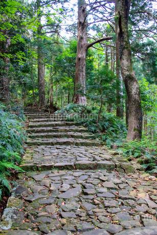 熊野古道の写真素材 [FYI03393149]