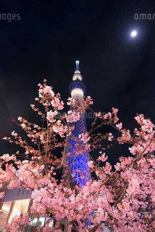 スカイツリー 日本 東京都 墨田区の写真素材 [FYI03393155]