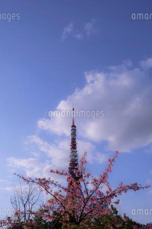 東京タワー の写真素材 [FYI03393156]