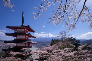 新倉山公園 の写真素材 [FYI03393161]