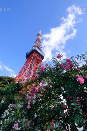 東京タワー 日本 東京都 港区の写真素材 [FYI03393168]