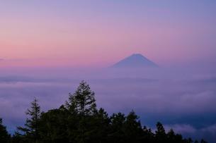 甘利山から望む富士山 日本 山梨県 韮崎市の写真素材 [FYI03393174]