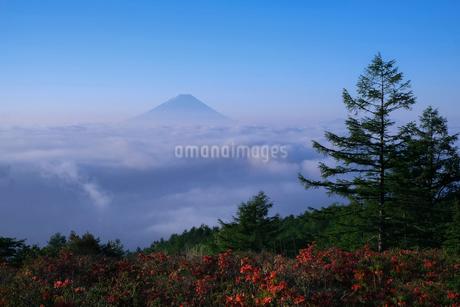 甘利山から望む富士山 日本 山梨県 韮崎市の写真素材 [FYI03393175]