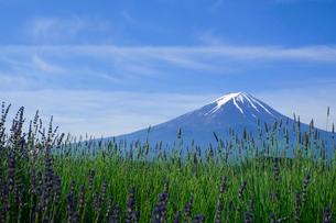 大石公園 日本 山梨県 富士河口湖町の写真素材 [FYI03393177]