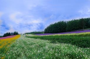 中富良野町 日本 北海道 空知郡の写真素材 [FYI03393184]