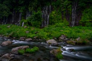 白糸の滝 日本 静岡県 富士宮市の写真素材 [FYI03393264]