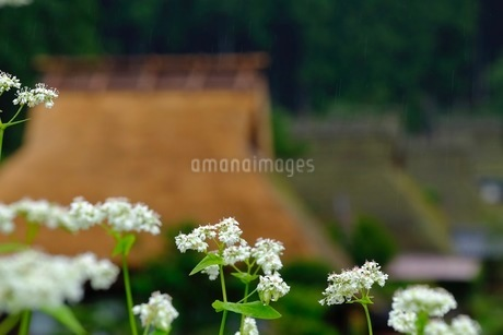 美山 かやぶきの里 日本 京都府 南丹市の写真素材 [FYI03393312]